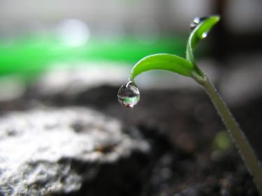 En plantas första steg ut i världen. Foto: Pontus Unosson