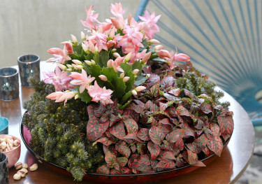 Växter i olika rosa toner är vackra tillsammans. Foto: Floradania