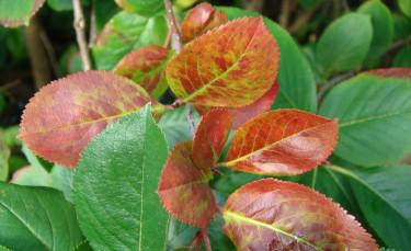 Bladen börjar så sakteliga anta sin höstskrud.