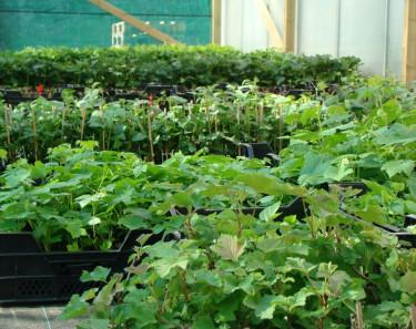 Buskar och klätterväxter i väntan på att packas ner.