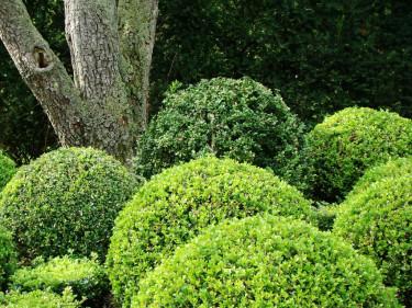 Runda former mot en rak trädstam skapar ett vackert blickfång.