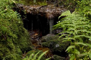 Vacker skogsmiljö