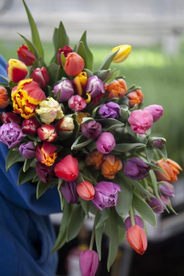 Färgrik tulpanbukett Foto: Blomsterfrämjandet