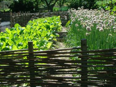 Ett pilstaket silar vinden och skapar skydd för köksträdgården innanför.  Foto: Katarina Kihlberg