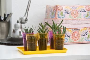 Blandade kaktusar i läckra plastmuggar eller glas på en färgglad bricka - enkelt och lättskött! Foto: Floradania