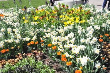 En blandning av olika lökväxter. Foto: Sylvia Svensson