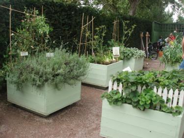 Att odla i lådor är praktiskt och samtidigt snygg. Typiska faktorer som är bra att tänka på vid planeringen.  Foto: Karin Malmberg