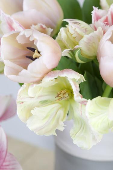 Ljusa tulpaner i närbild Foto: Blomsterfrämjandet