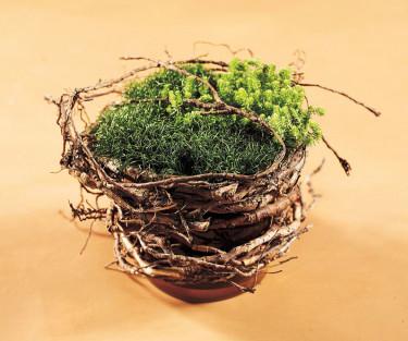 Det behövs inte mycket för att en grön växt ska ändra karaktär.