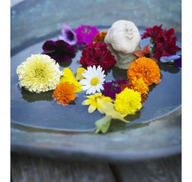Tropikerna i vattenbad. Foto: Blomsterfrämjandet/Peter Carlsson