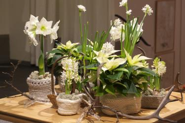 Norrländskt stilleben med renhorn som dekoration. Krukor av lovikkavantar. Foto: Blomsterfrämjandet/Anna Skoog