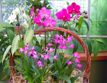 Orkidékorg. Foto: Sylvia Svensson