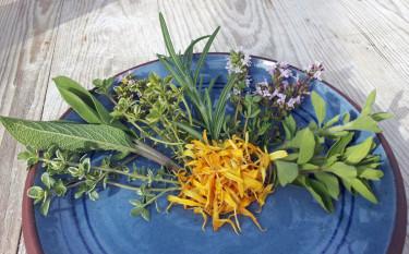 Från vänster vitbrokig citrontimjan, salvia, gulbrokig citrontimjan, rosmarin, kryddtimjan, grekisk oregano och i mitten torkade blad av ringblomma. Foto: Monika Hulthe