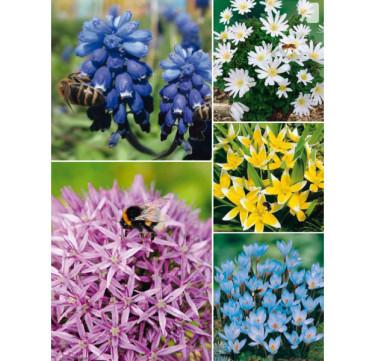 Lökpaket Bee Happy. Foto: Odla.nu