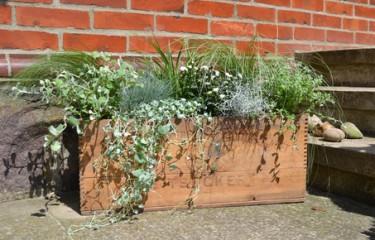 Prydnadsgräs och sommarblommor i sockerlåda.  Foto Blomsterfrämjandet