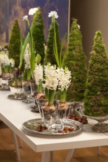 Dukning med hyacinter, tazetter och mossgranar. Foto: Blomsterfrämjandet/Anna Skoog