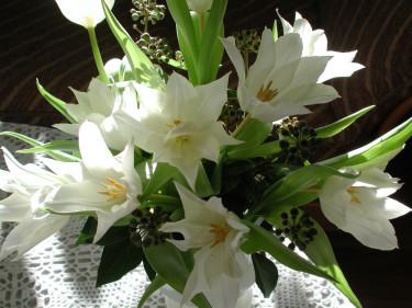 Vita liljetulpaner med murgrönaknoppar  Foto och arr: Sylvia Svensson