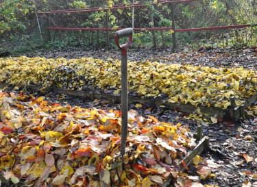 Lövlimporna är inte bara suverän grogrund för fin mull utan även vackra att se på. Foto: Maria Andersson