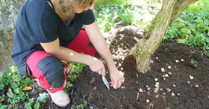 Sätt smålökar under småträd och framför buskar