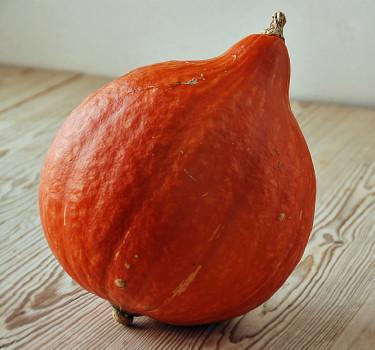 Vintersquash med sitt näringsrika och hårda, orange kött är lätt att odla och ger stora, fina skördar.