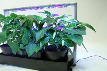 I 'Mini Plant Factory' odlar du i vatten och med LED-ljus speciellt utvecklat för odling.  Foto: Venso EcoSolutions AB