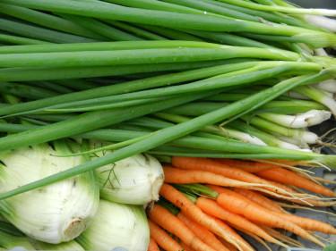 Ekologiskt odlade grönsaker från Källdalens Trädgårdar. Foto: Susanne Lundberg