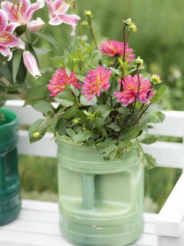 Dahlia. Foto: Blomsterfrämjandet/IBC.