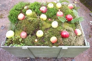 Äppelutställning i den nya utställningslokalen Stallet. Foto: Sylvia Svensson