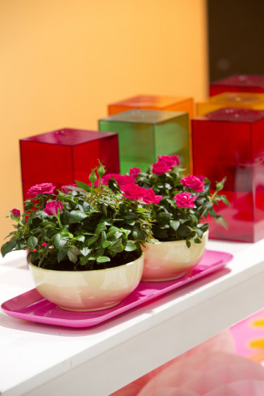Små rosor på en färgstark bricka utgör ett vackert blickfång. Foto: Floradania