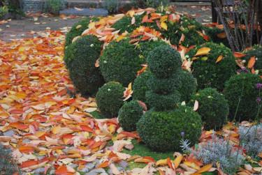 Vem vill inte ha så här fina, runda former i trädgården? Foto från Katarinas Trädgård.
