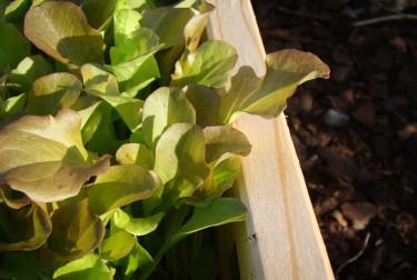 Mycket kan hända i en odlingslåda.  Lisa vid Berget har skrivit en trädgårdsnovell som vi nog alla kan leva oss in i!