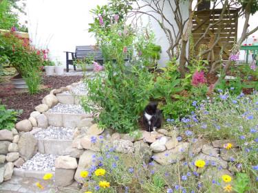 Lasse Petersson tävlade och vann med den härliga bilden på trädgårdens nya oas.