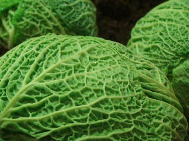 Kålväxter kräver mycket näring av jorden!