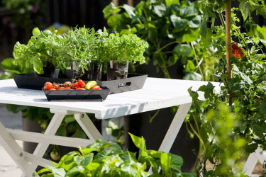 Kryddörter och ätliga specialiteter på terrassen.