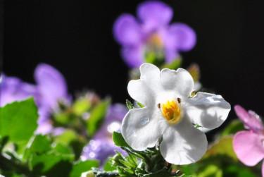 Härliga växter för uteplats och balkong