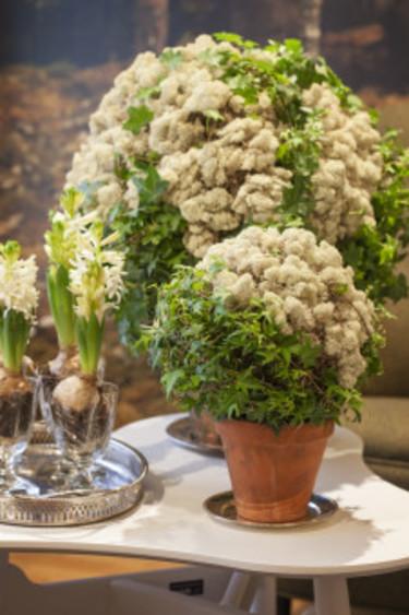 Istället för gran - murgröna och mossbollar i arrangemang.  Foto: Blomsterfrämjandet/Anna Skoog