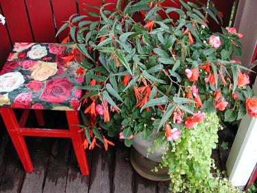 Begonia med sällskap. Foto+arr: Sylvia Svensson
