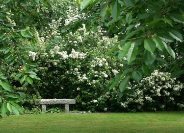 Vitblommande buskar passar som bakgrund. Foto: Sylvia Svensson