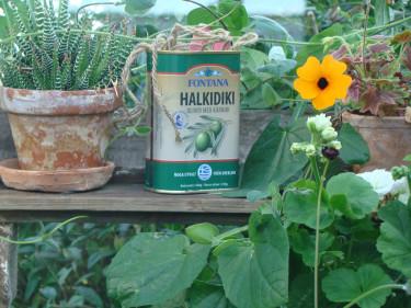 En skojig röra som visade sig bli riktigt fin i mitt växthus. Bra att komma ihåg till nästa år!  Foto: Katarina Kihlberg