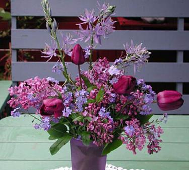 **Tulpan** 'Blue Aimable', ** lila syrener**, **förgätmigej** mfl som man hittar i trädgården. Foto: Sylvia Svensson