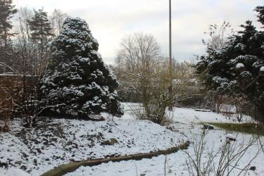 Vinterträdgård! / Foto: Anna Theorin