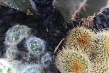Kaktusar i glasvas med dekorgrus //Foto: Anna Theorin