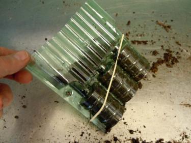 Pelargonboxen hålls igen med gummiband Foto: Bernt Svensson