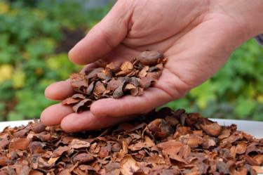 Kakaoskal. Foto: Skandinaviska Trädgårdsprodukter AB