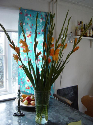 Gladiol, _Gladiolus x hortulanus_. Foto: Blomsterfrämjandet.