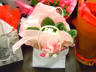 Ljuvligt paketerad saintpaulia. Foto: Sylvia Svensson