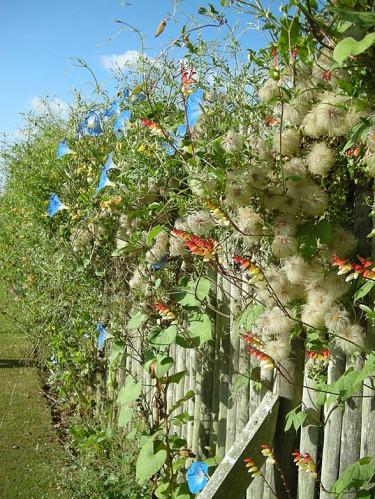 Le Jardin Plume, Frankrike -potagestaket som håller rådjuren borta Foto: Sylvia Svensson