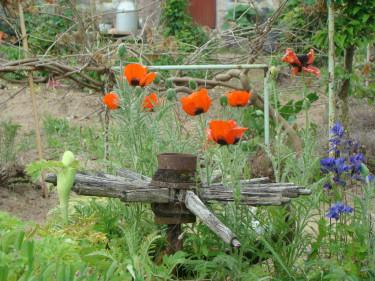 Temat **Växterna & tingen** gäller för sommarens fototävling i forumet på Odla.nu. [Välkommen att delta du med!](http://forum.odla.nu/index.php?showtopic=115854). Foto: Katarina Kihlberg (ej deltagande i tävlingen!)