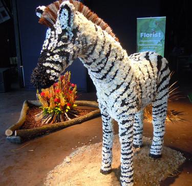 Munkeröds zebra och lägereld Foto: Sylvia Svensson