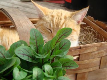 Vilken katt trivs inte i solgasset på balkongen?